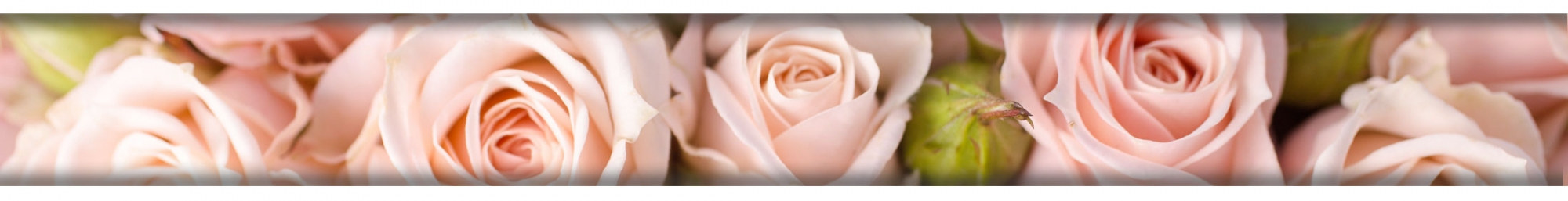 gallery/immagine-rose-rosa